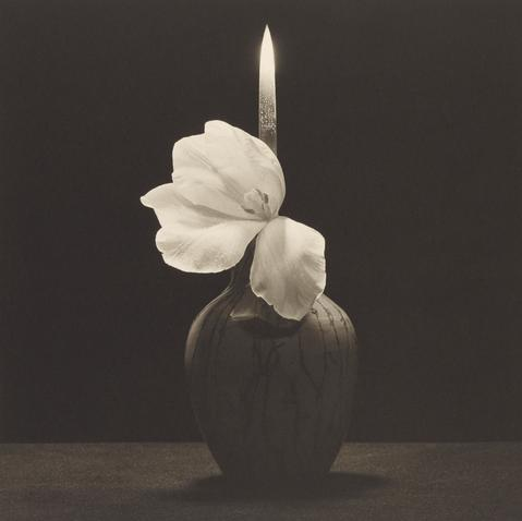 Mapplethorpe - Flower with Knife