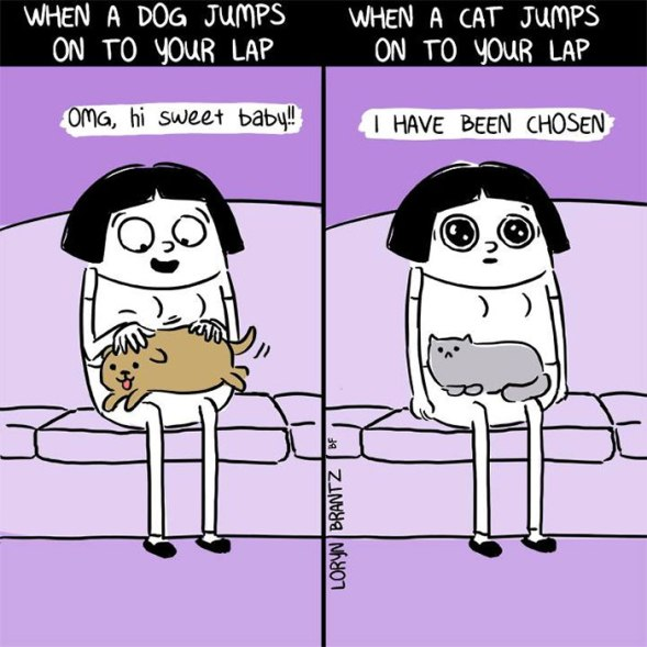 funny-cats-vs-dogs-comics-24-59c12a33a31a7__700